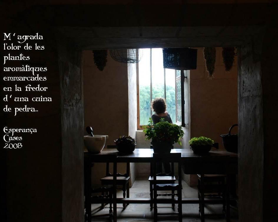plantes i cuines aromàtiques